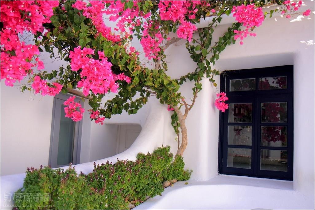 希臘愛琴海小島-米克諾斯