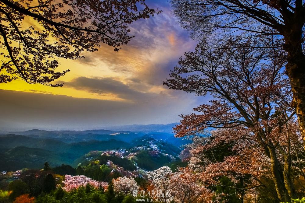 日本秘境賞櫻【開窗整山花見美全收錄】